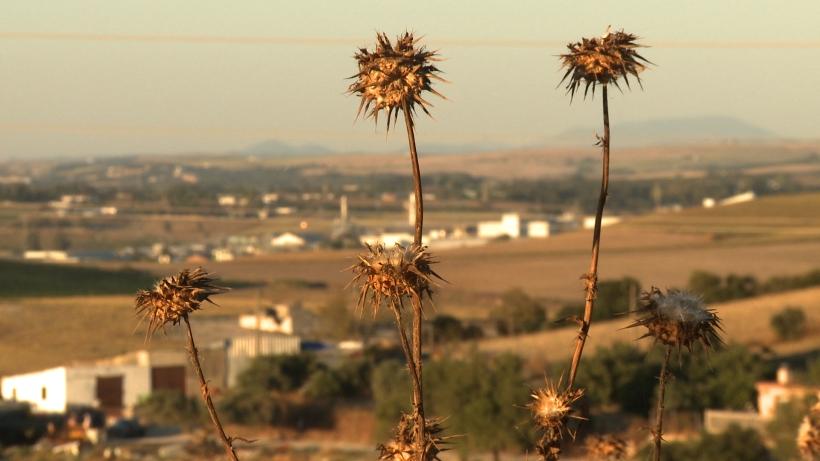 Landscape - Thistles